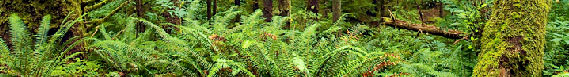 Photo of green ferns