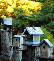 Photo of small bird houses at WildSpring