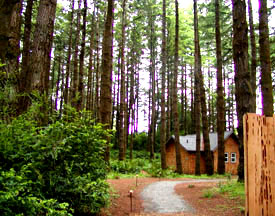Photo of trail in cabin area forest