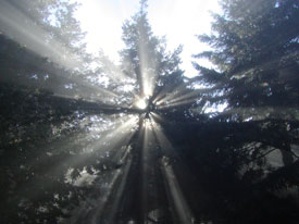 Photo of sunlight coming thorugh trees